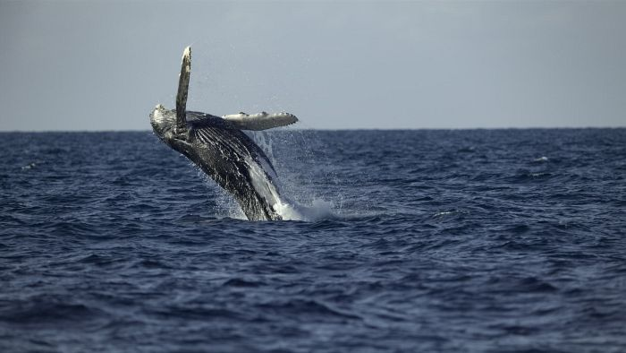 season 1 of Secrets of the Whales